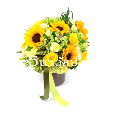 Sunflowers embrace