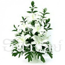 White oriental lily (5 White lilies)