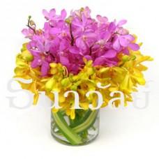 Mokara in a glass vase